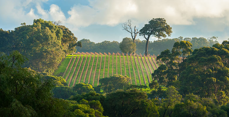 margaret-river-wineyard-australien-780x400.jpg